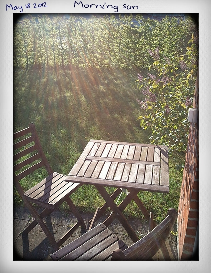 Morning sun in my garden